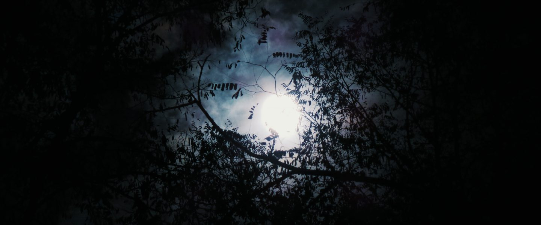 Sunny, dark days –  Remembering Seana – part 2
